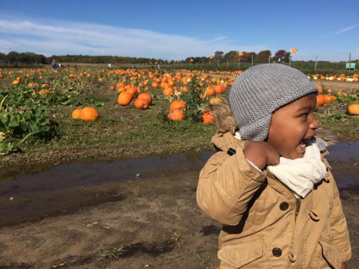 Pumpkin Patch on Harbes Farm, Long Island